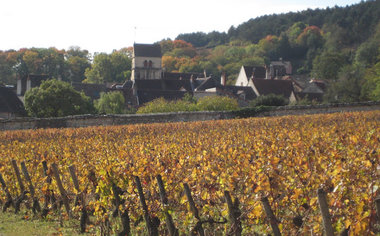 A Perfect Day In Burgundy Vineyards