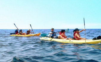 Kayak, Snorkeling, and Marine Life Encounter Tours