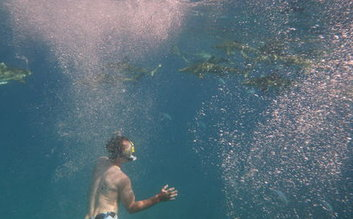 snorkel and swim with sharks