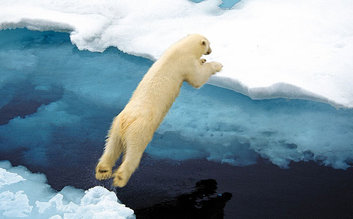 Watch out Polar Bears approaching!